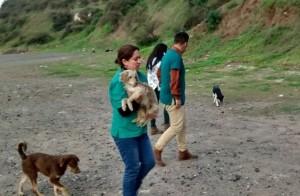 escorial perros 2