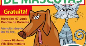perros y gastos esterilizacion carreras y bicentenario